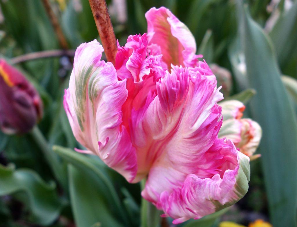 Garden & Flora